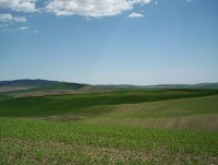 Highlight for Album: Palouse - May 2005